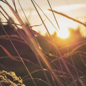 Life-Church-Home-Thumbnails-Wheat-Sunset